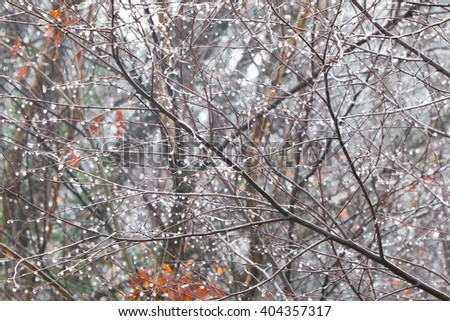 Tree branch with frozen water drops after freezing rain, autumn background, selective focus - stock photo