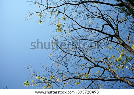 tree branch with young green leaf  and blue sky - stock photo