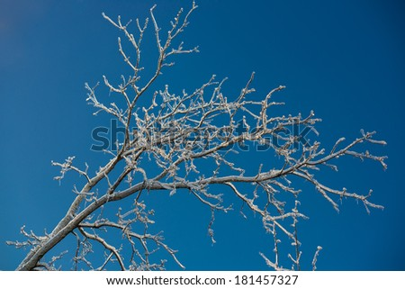 Tree branches against blue sky after ice storm - stock photo