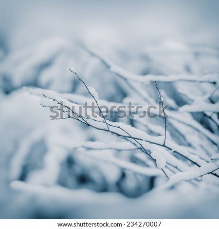tree branches covered with snow, December - stock photo