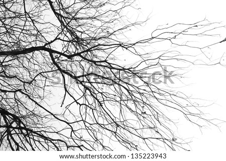 tree branches isolated on the white background - stock photo