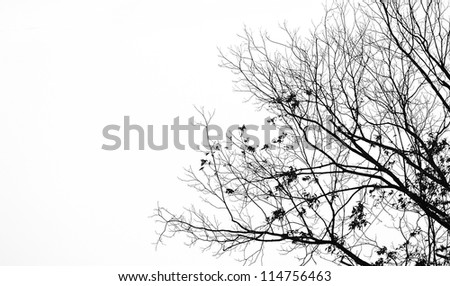 tree branches isolated on white background - stock photo