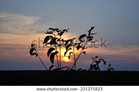 tree branches on a background sunset - stock photo