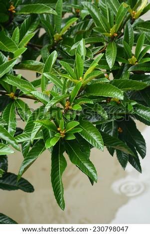 Tree branches on a rainy day - stock photo