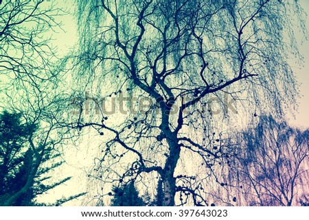 tree branches seen from below,Filtered with vintage color preset - stock photo