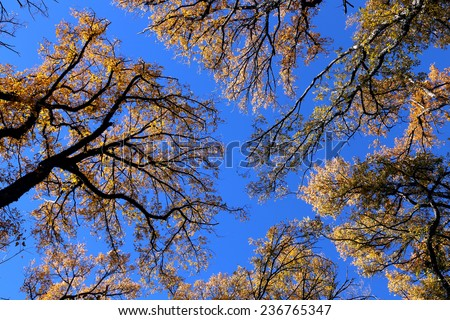tree branches with Fall leaves - stock photo