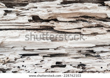 Tree Closeup Rotting Texture Art Large tree rotting on beach sands from flood storms a closeup abstract background art of scenic beauty of natures cycle - stock photo