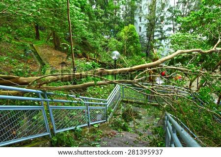 Tree collapse after typhoon - stock photo