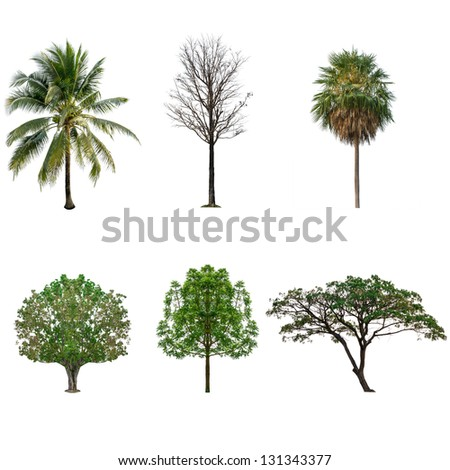 Tree collection set  isolated on white - stock photo