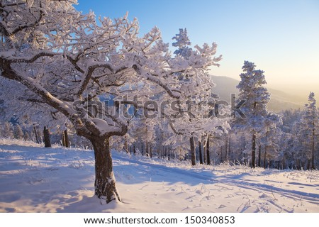 Tree covered with snow bizarre in the winter forest - stock photo
