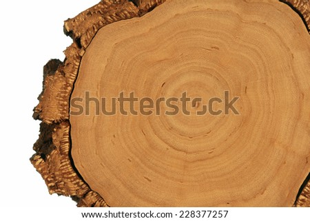 Tree Cross-Section with Thick Bark - stock photo