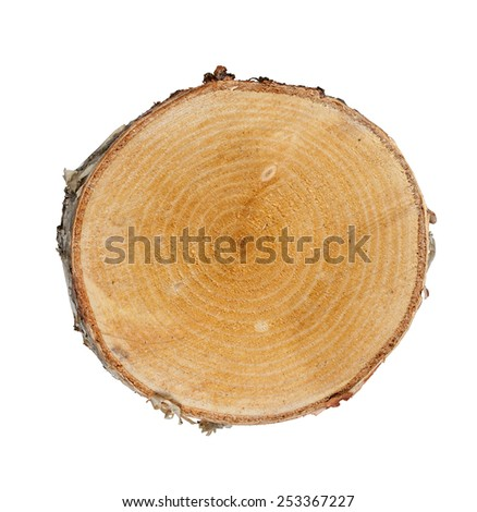Tree cut birch isolated on white background - stock photo