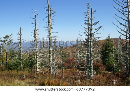 Tree Damage From Acid Rain Horizontal - stock photo