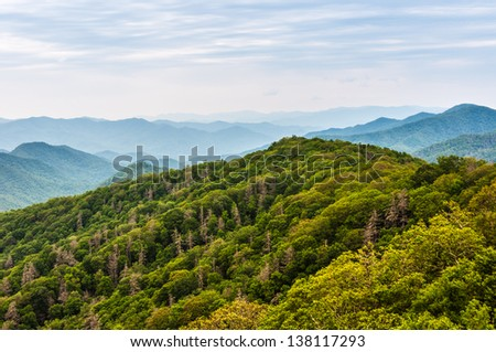 Tree damage in the Great Smoky Mountains National Park - stock photo