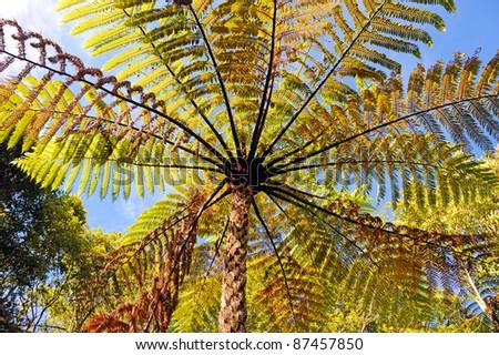 Tree Fern, Blue Lake, New Zealand - stock photo