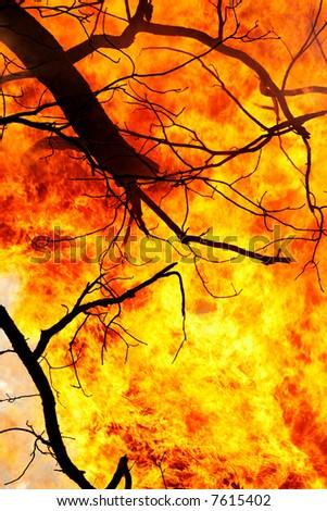 Tree fire - stock photo