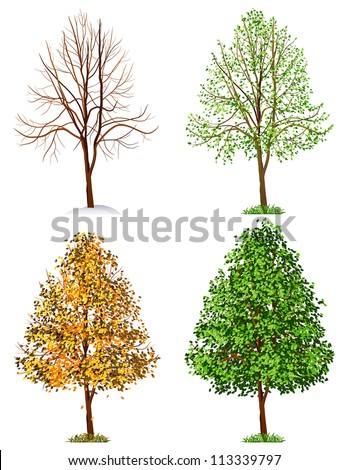 Tree,  four seasons - raster version - stock photo
