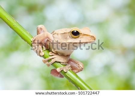 tree frog and natural green background - stock photo