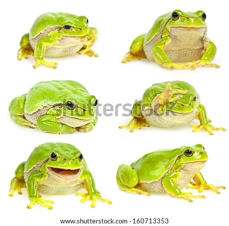 tree frog collection - stock photo