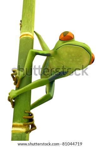 Tree frog on bamboo bole isolated over white background - stock photo