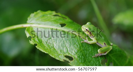 Tree frog on the leaf - stock photo