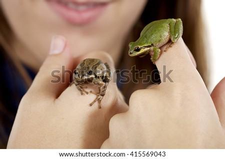 Tree frogs - stock photo