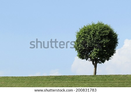 Tree grass blue sky summer - stock photo