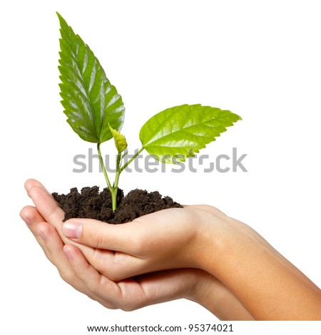 tree green fresh in female hand isolated on background - stock photo