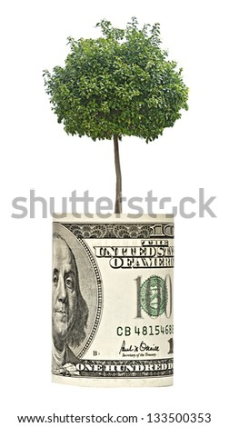 tree growing from dollar bill - stock photo