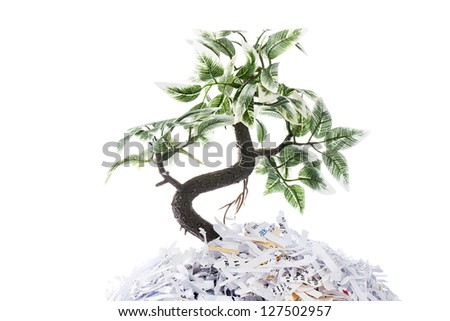 Tree growing from shredded papers on white background - stock photo