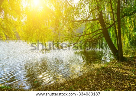 Tree Growing near Lake and Bright Sun in Tree Branches - stock photo
