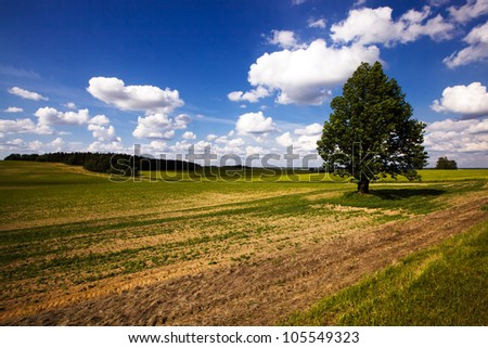 tree growing on an agricultural field. summertime of year - stock photo