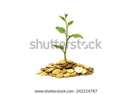 tree growing on coins / csr / sustainable development  - stock photo