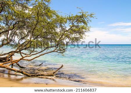 Tree growing over ocean in the beautiful Maui beach in Hawaii - stock photo