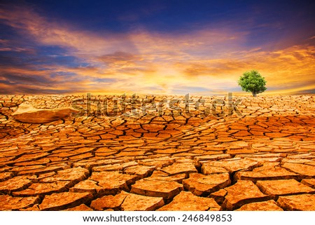 Tree growth in Cracked Earth - stock photo