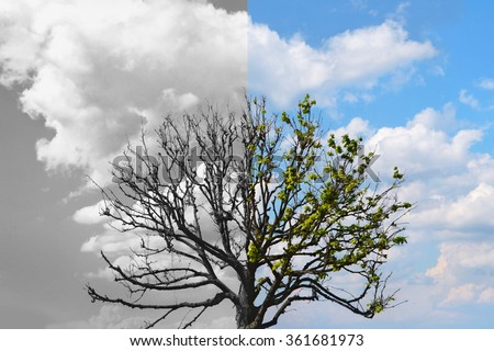 Tree. Half is alive with leaves, another half is dead. Concept for eco poster or health metaphor. - stock photo