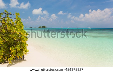 Tree hanging over stunning lagoon with clean blue sky - stock photo