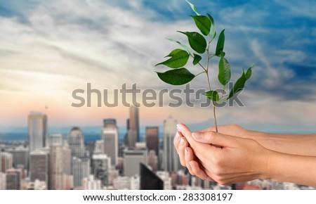Tree, Human Hand, Plant. - stock photo