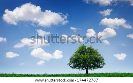Tree in a field under a blue sky with clouds - stock photo