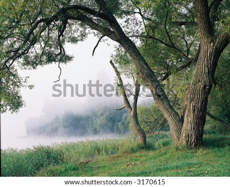 Tree in a fog - stock photo