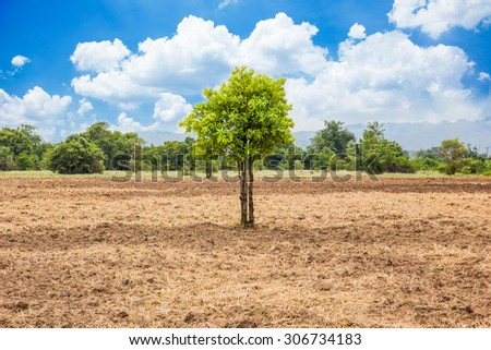 tree in cornfield - stock photo