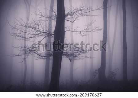 tree in dark forest halloween mood - stock photo
