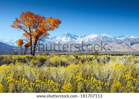 Tree in desert landscape / USA / America mountains - stock photo