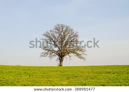 tree in early spring - stock photo