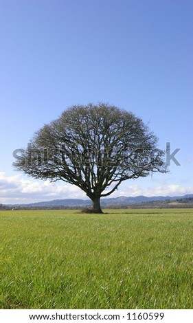 Tree in Field - stock photo