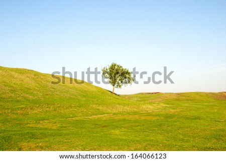 tree in green field against sky background - stock photo