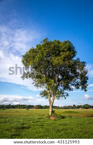 tree in green field with clear sky and cloud in background - stock photo