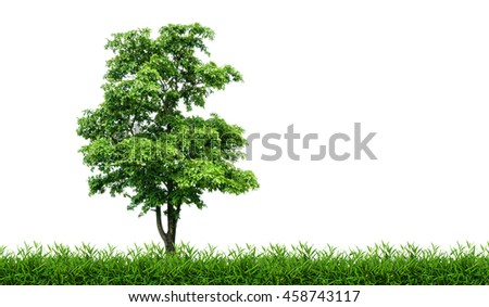 Tree in green meadow isolated on white background. - stock photo