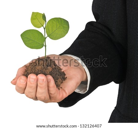 tree in hand - stock photo