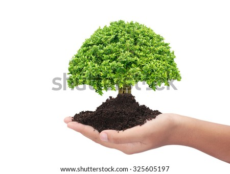 Tree in hand stock photos images pictures shutterstock for What do we use trees for